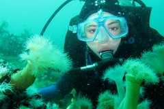Diving, Scuba Diving, Bottom Of The Sea, Coral